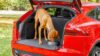 Jaguar Pet Products (Jaguar Pet Accessory Packs)