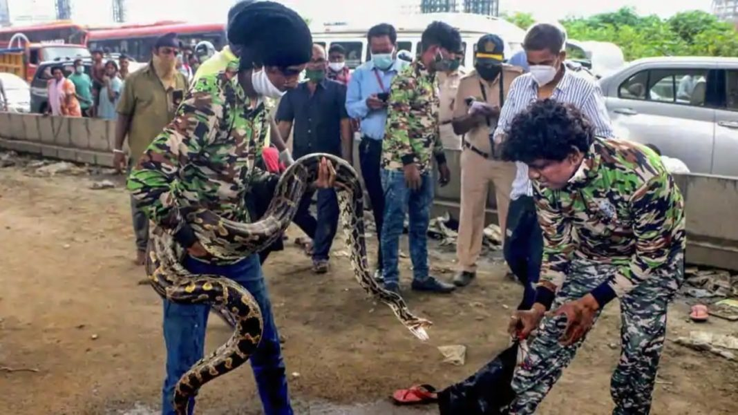10 feet long snake causes traffic jam in Mumbai