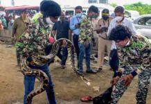 10 feet long snake causes traffic jam in Mumbai